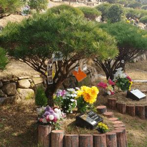 수목장(자연장